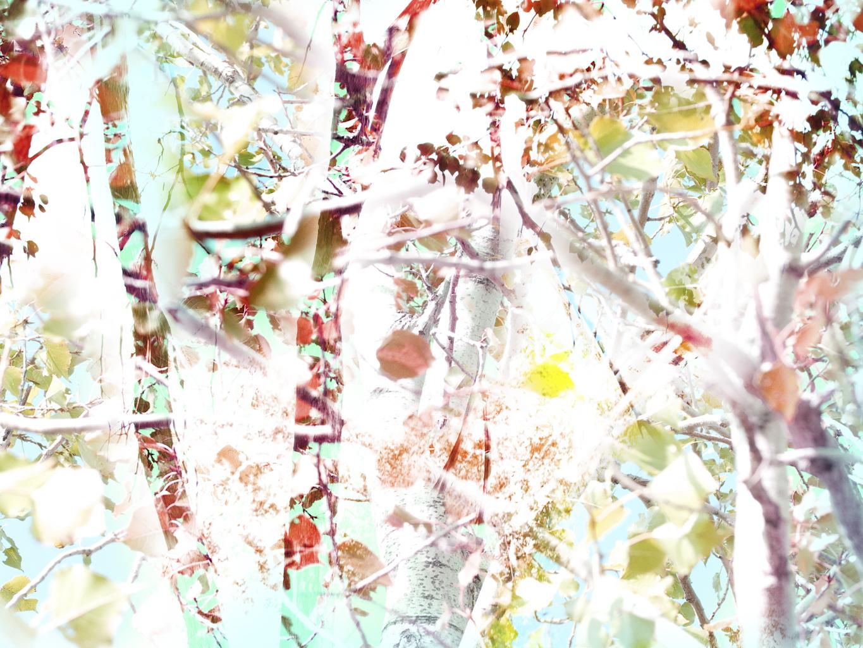 Landscapes13.jpg