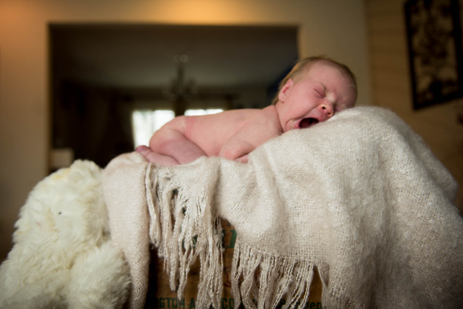 Halfast-newborn-5.jpg