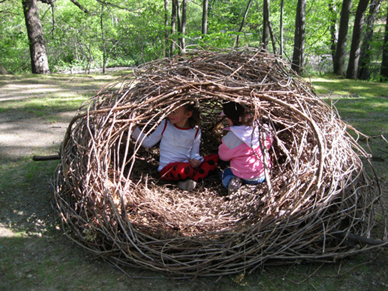 Nature of the Human Nest