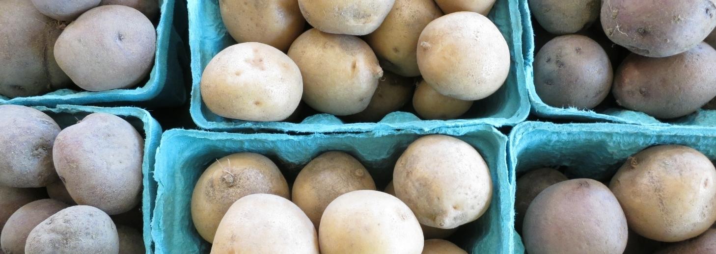 2015 / New Fall Potatoes / digital photograph