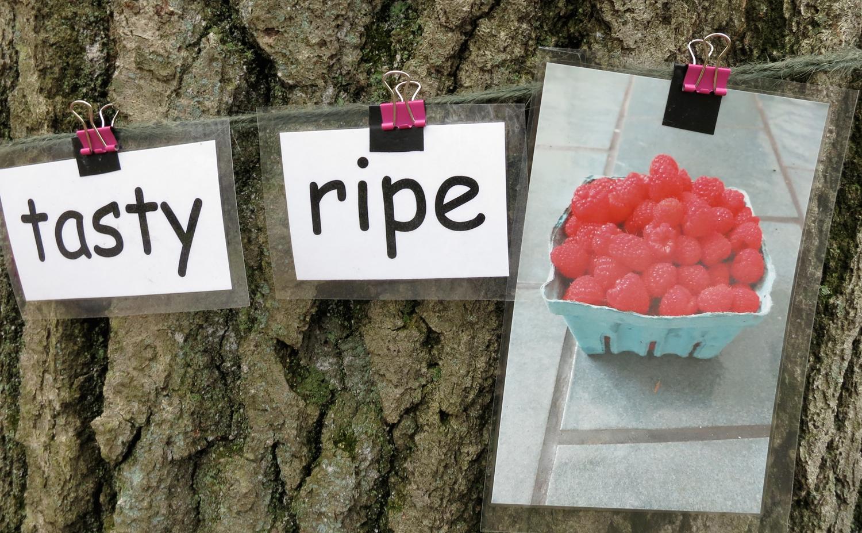 Tasty+ripe+raspberries.jpg