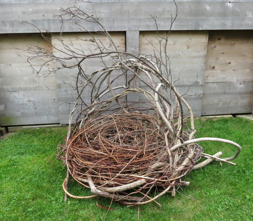 Small Human Nest