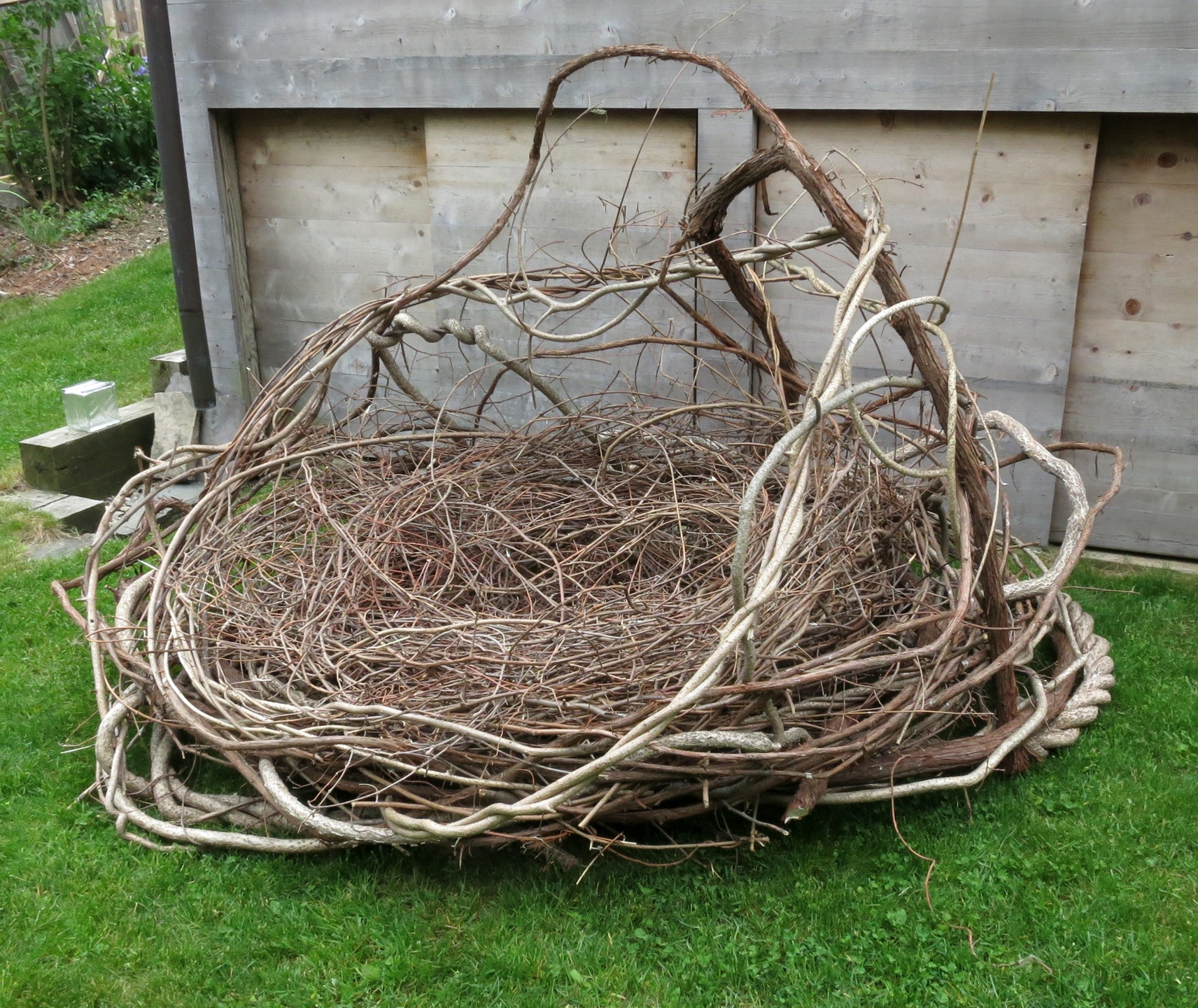 Large Human Nest