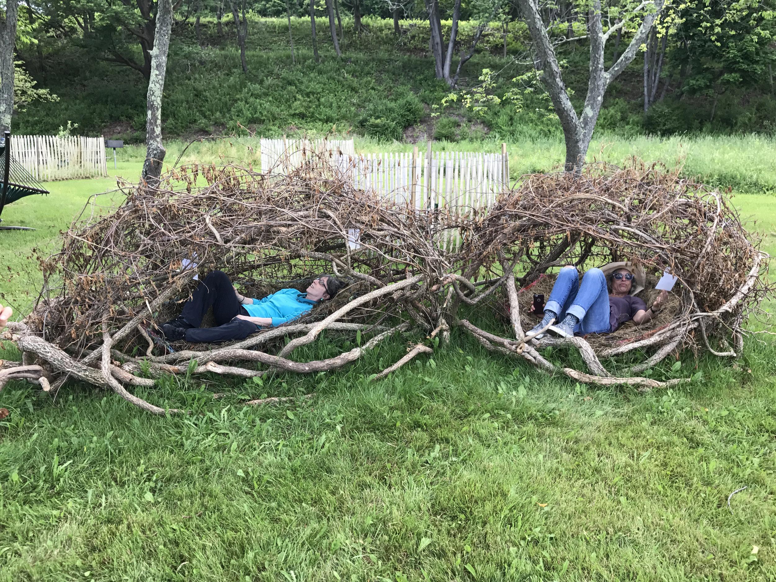 two nests Peddocks.jpg