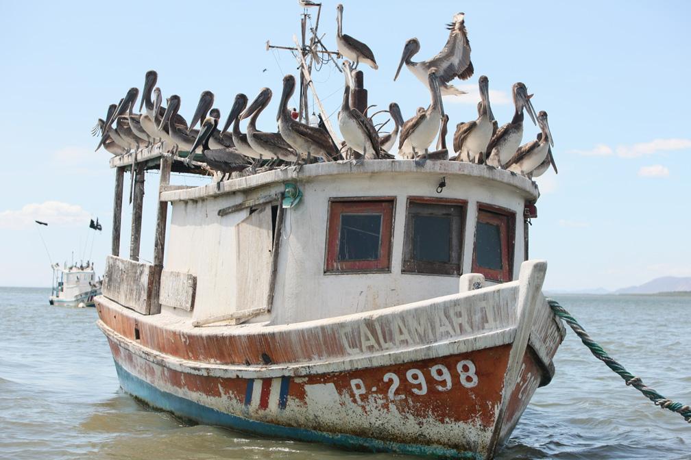 Gulf_birds.JPG