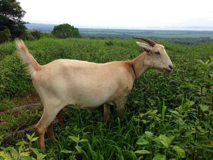 Our Farm Animals.jpg
