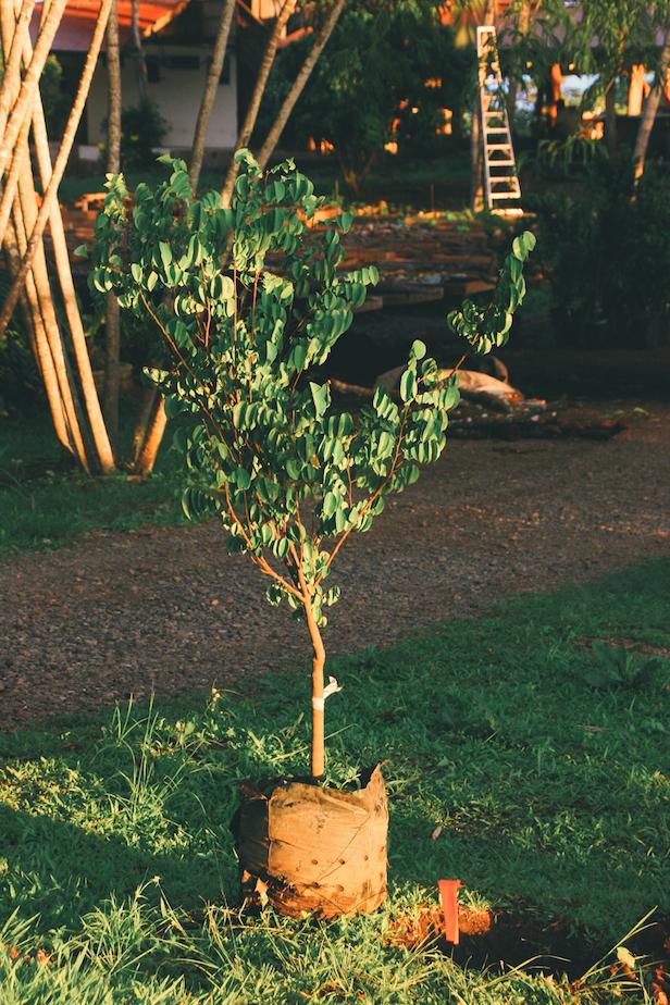 FruitPlanting_04.jpg