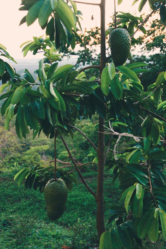FruitPlanting_06.jpg