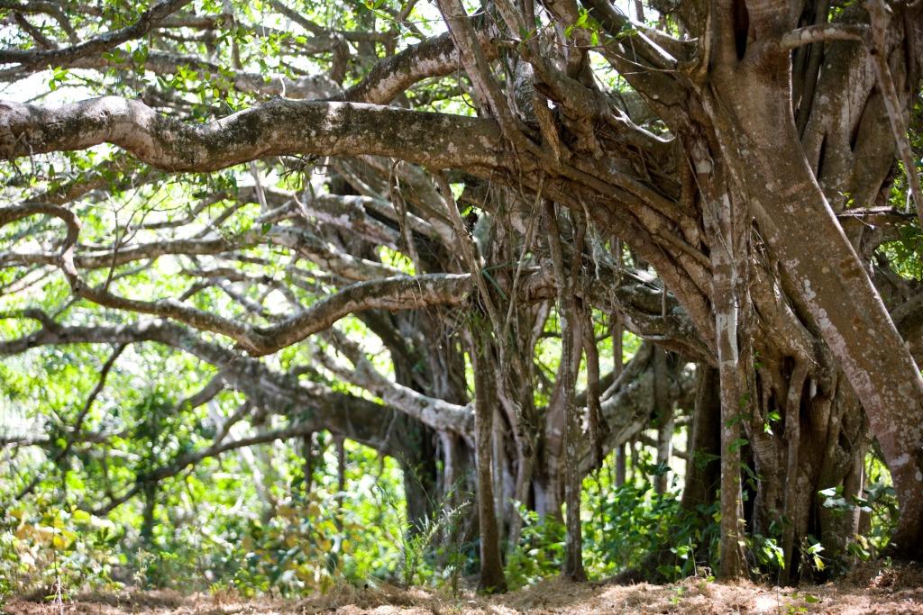 Trees_property.jpg