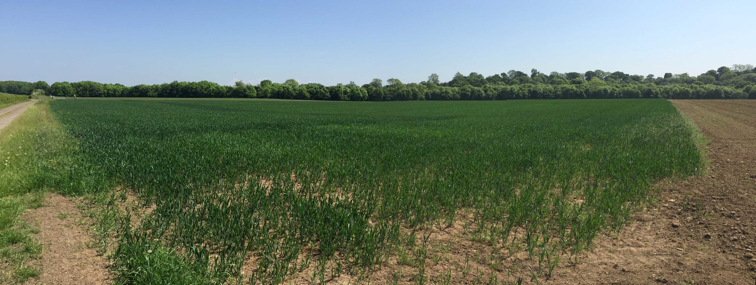 Initially assessing a crop condition can be both difficult to ascertain and time-consuming from the ground...