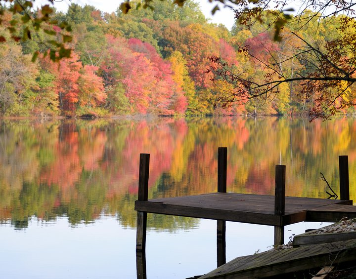 amazing foliage by dock.jpg