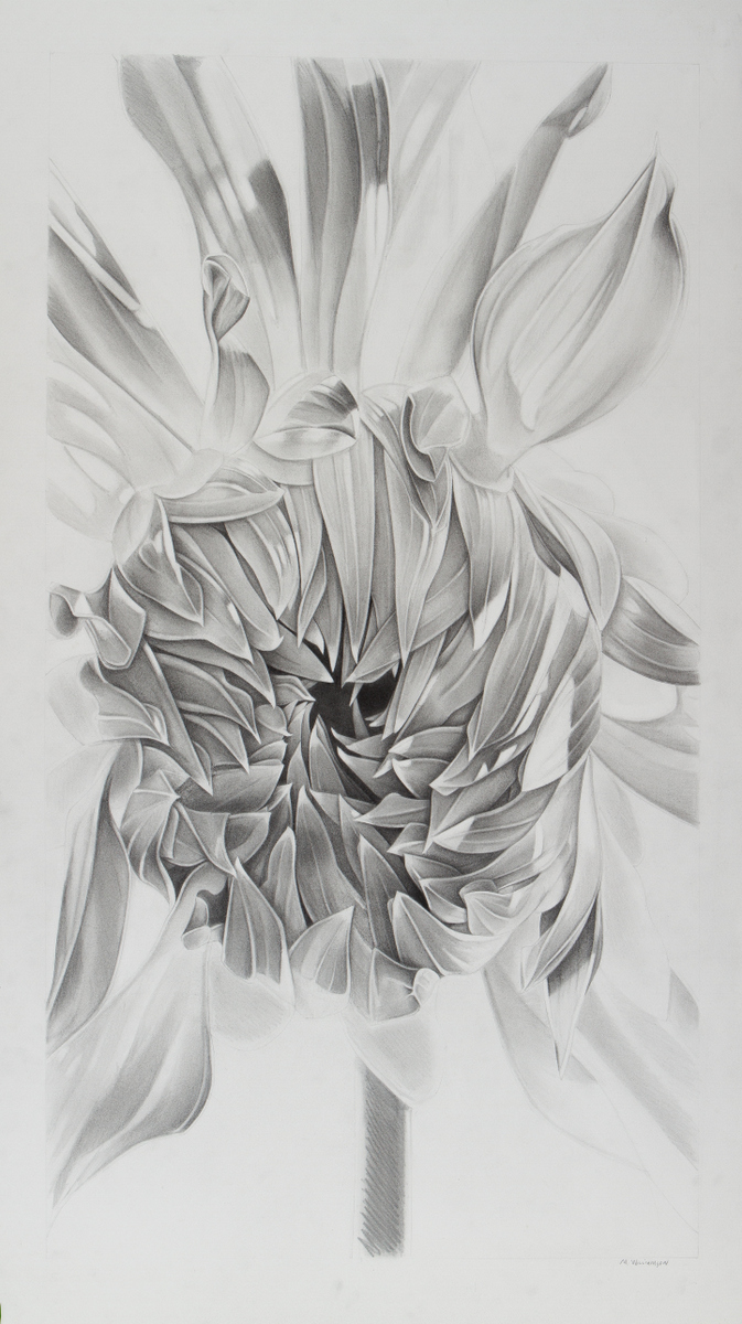"Sunflower, 26"" x 48"""