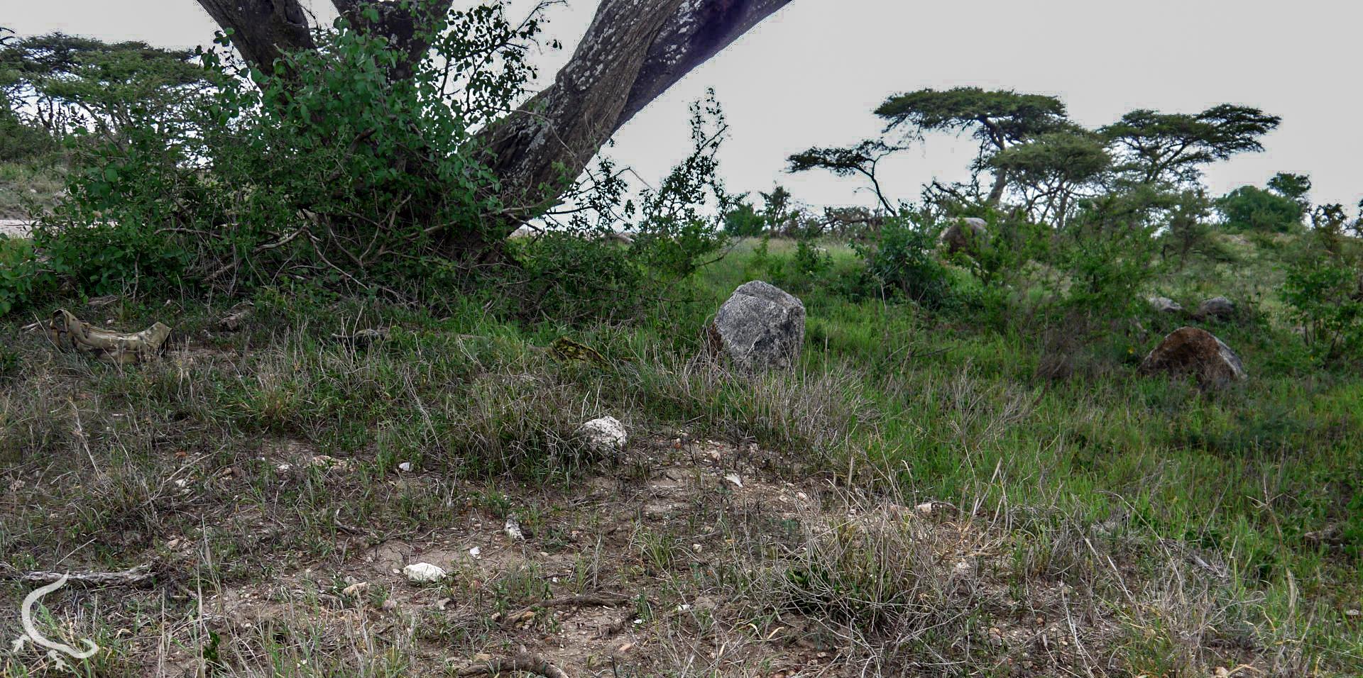 Africa, 2014... Multicam VS Greenzone....