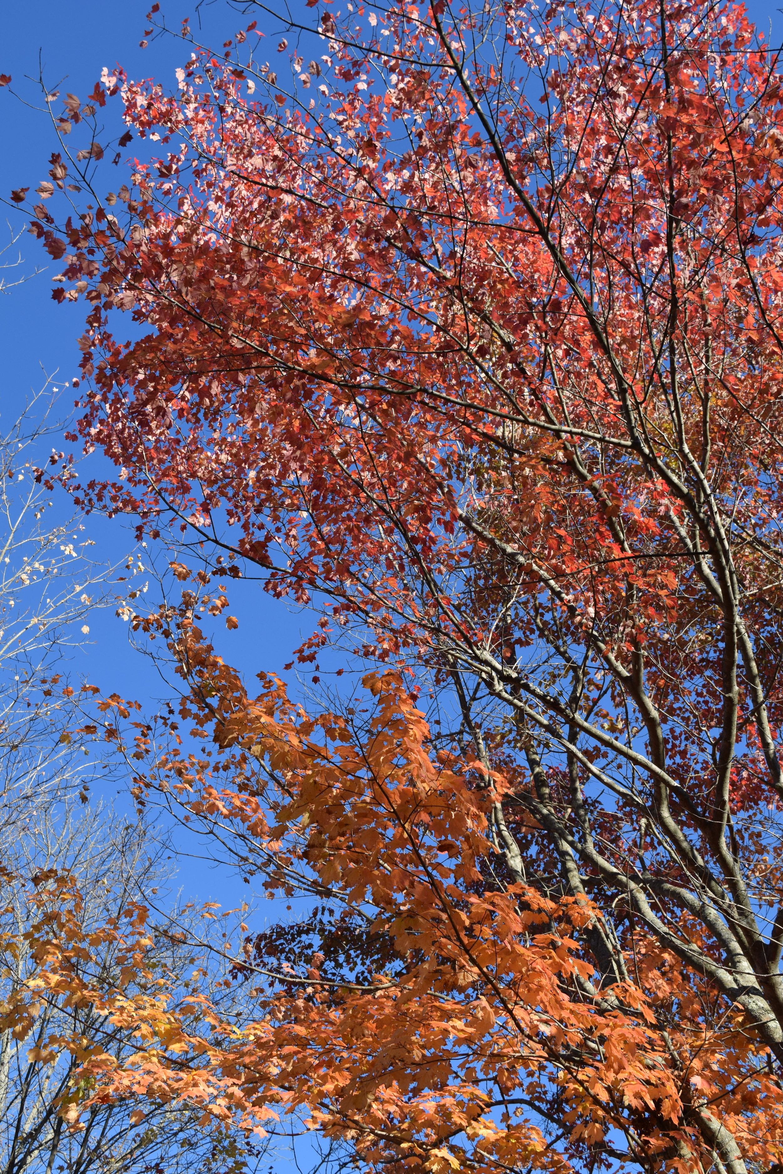 This fall has been one of the most gorgeous in the past few years.