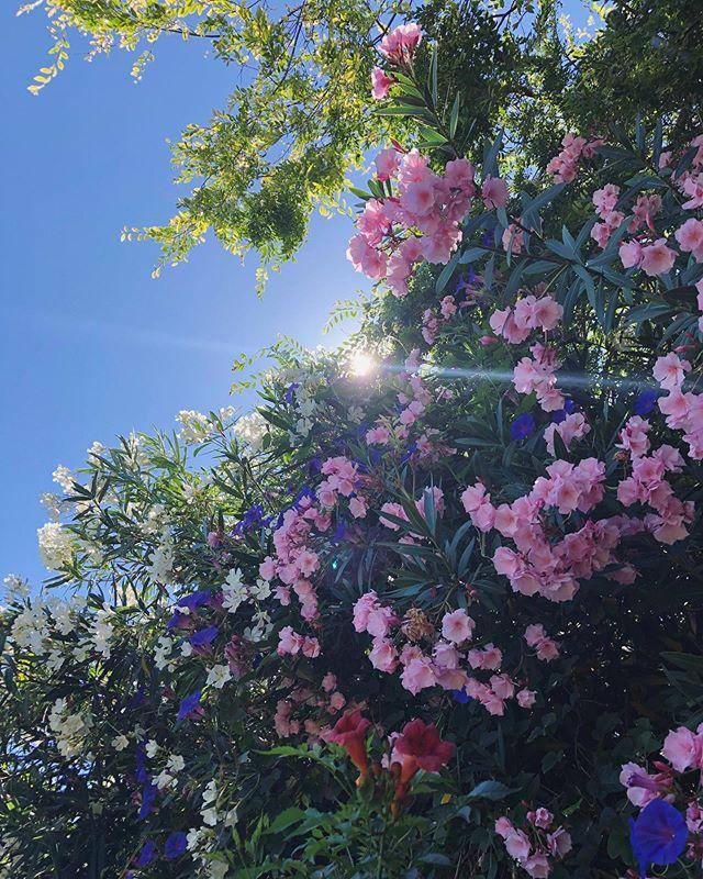 Summertime magic ✨