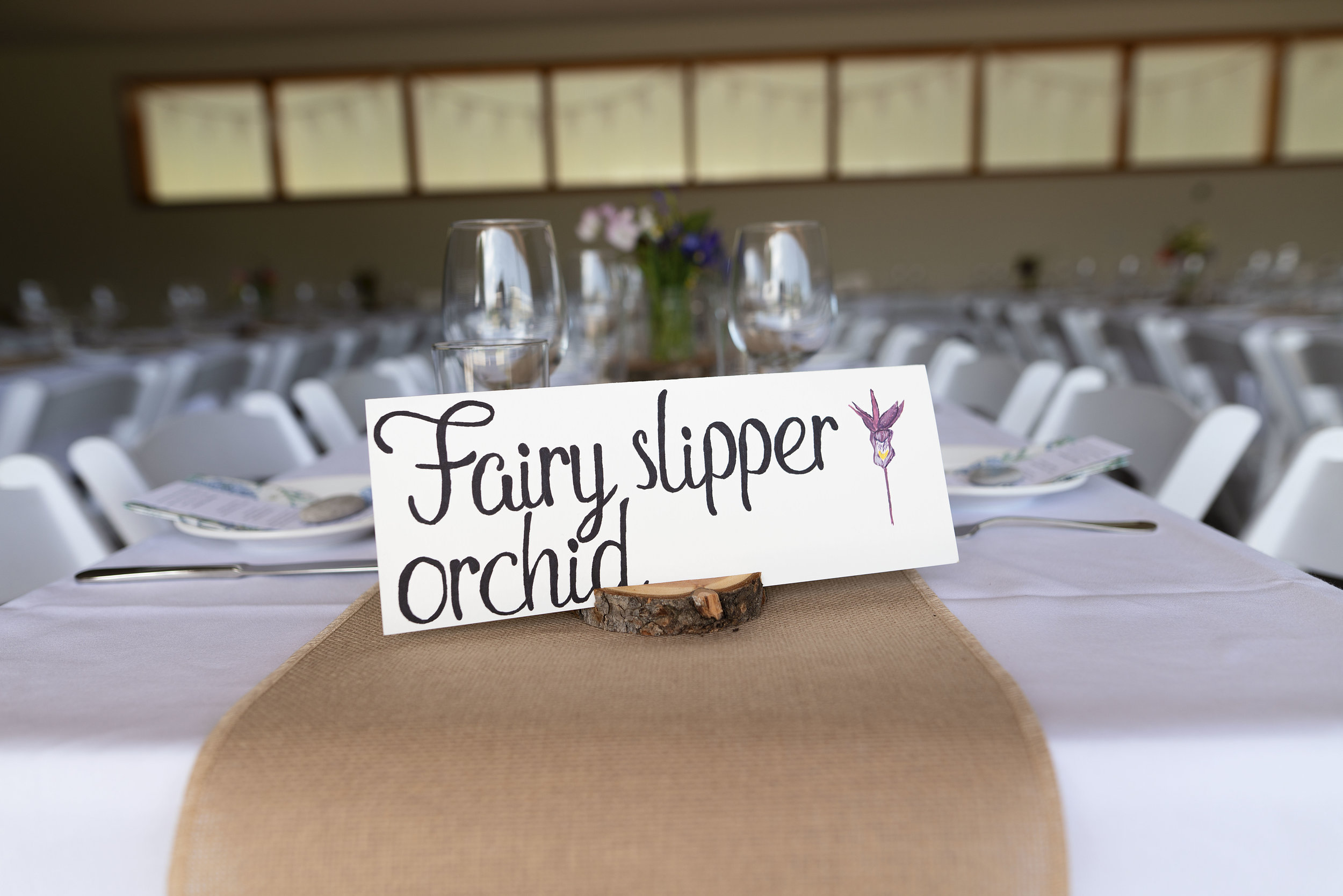 fairy sipper orchid.jpg