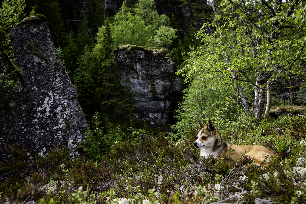 Gâte and the Troll Boulders, Lundehund, 2013