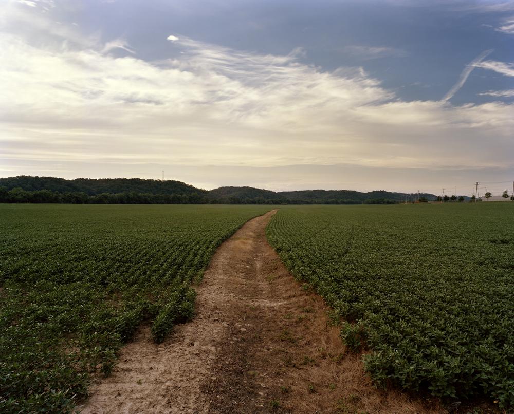 Soybean Field, Buffalo, WV