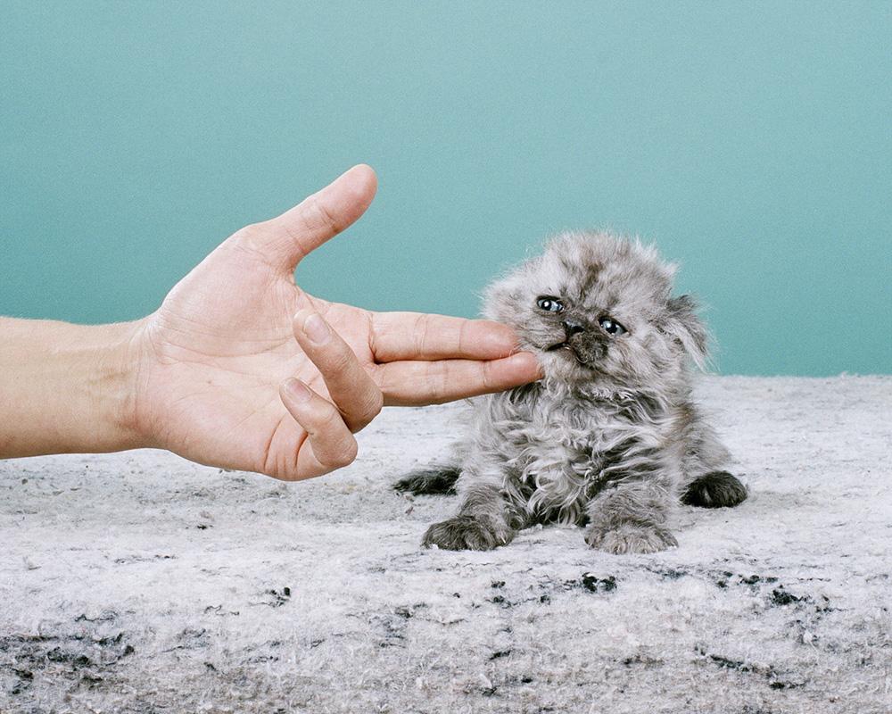 Saddest Kitten ©Jamie Campbell