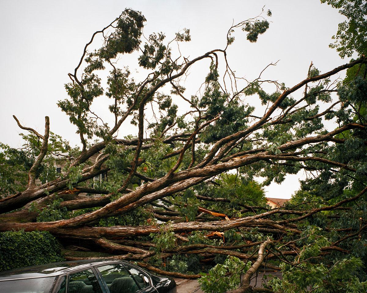 Fallen Tree. © Shane Rocheleau
