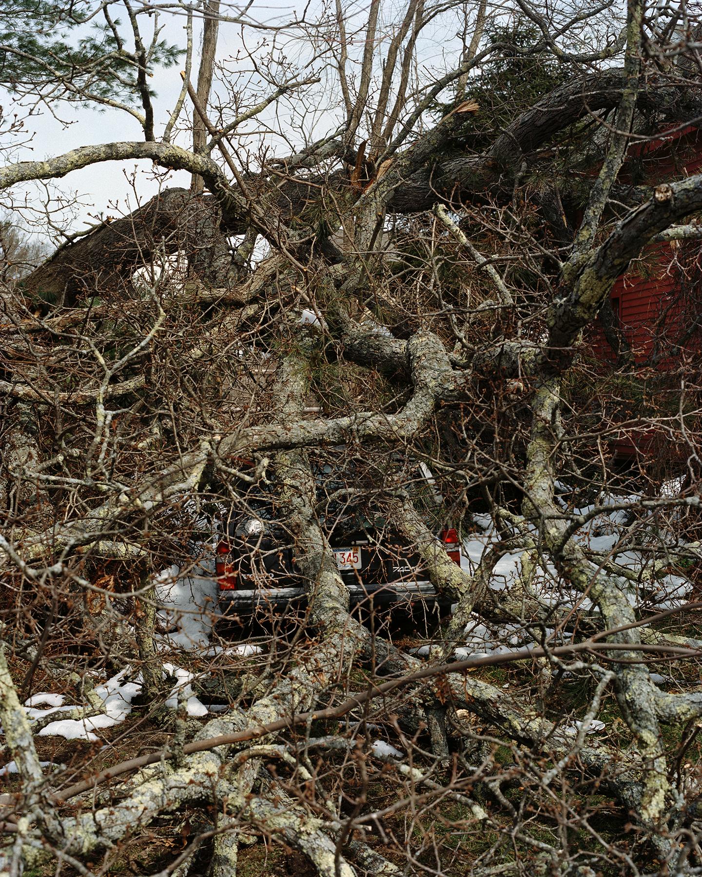 Fallen Tree on Volvo. ©Alexa Cushing