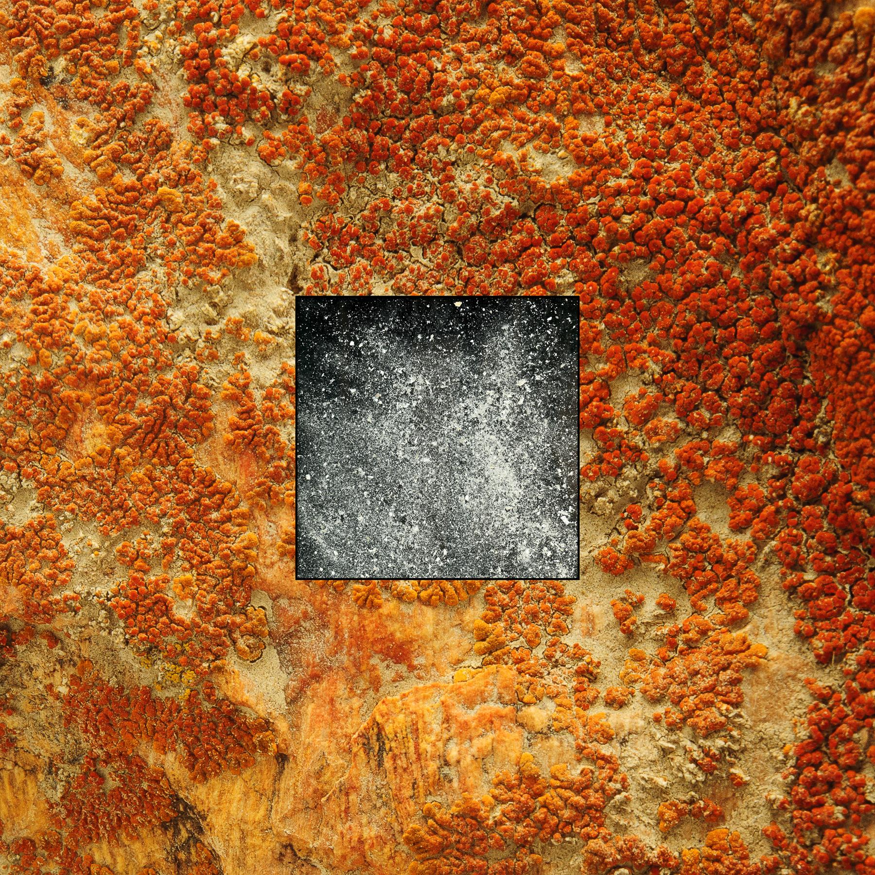 Mom's Ashes on Lichen. © Daniel Barsotti