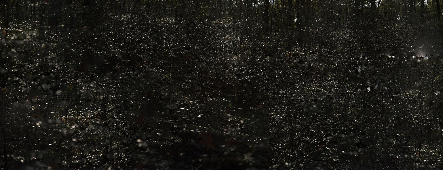 Death Becomes Darkness. © Julianne Nash