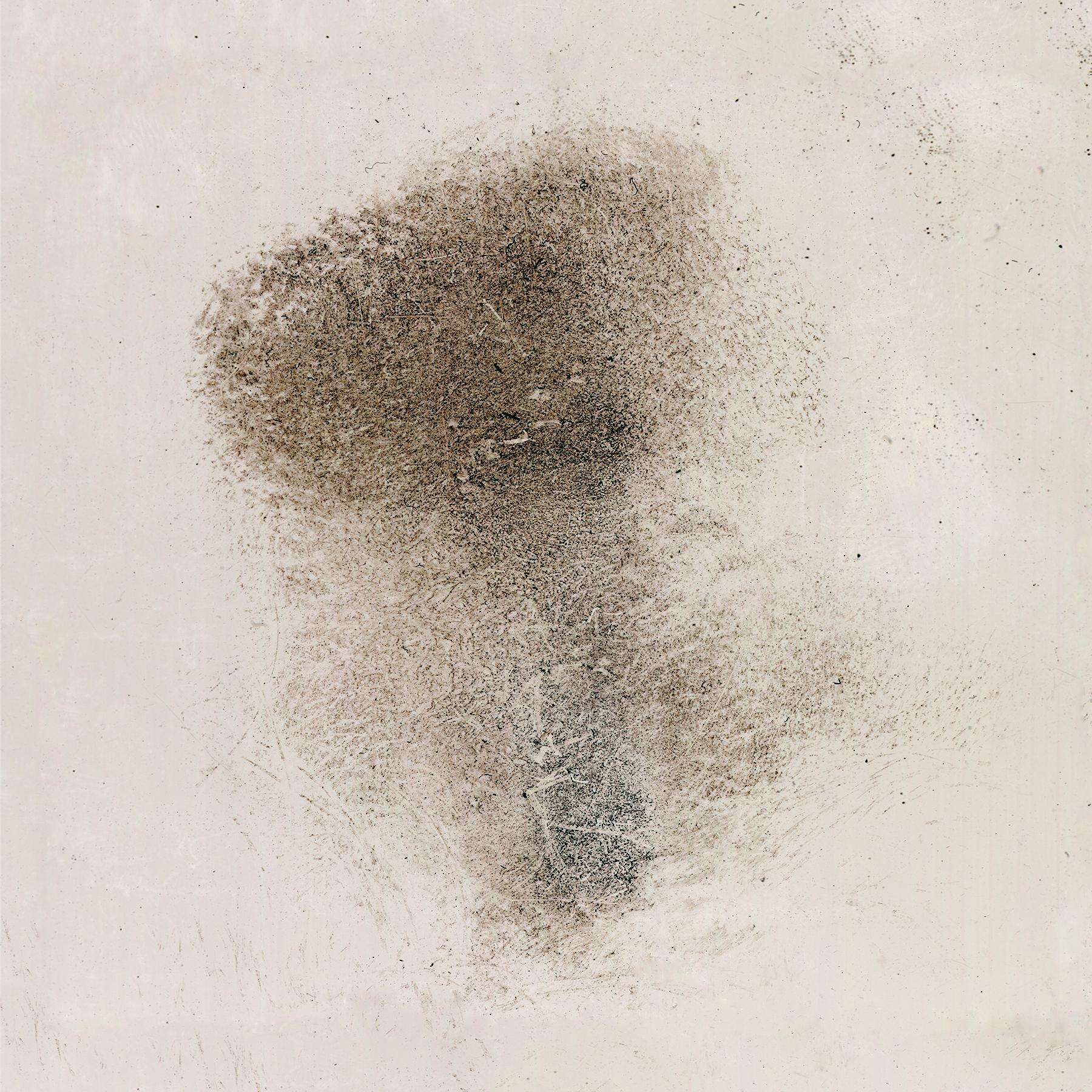 Ash Imprint. © Erin Neve