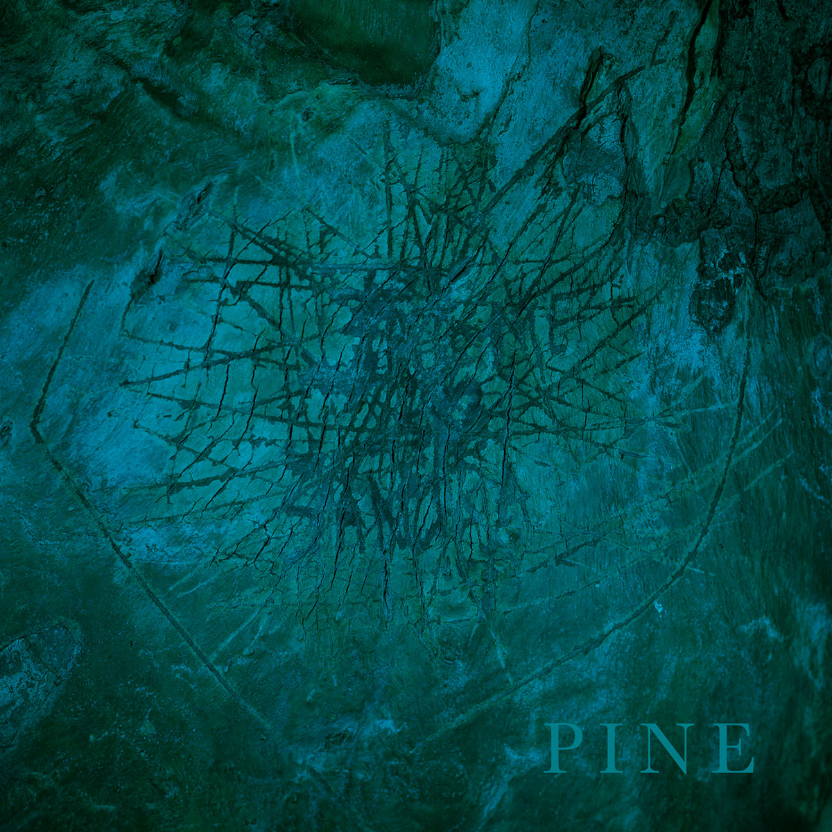 Pine  by Eirik Johnson