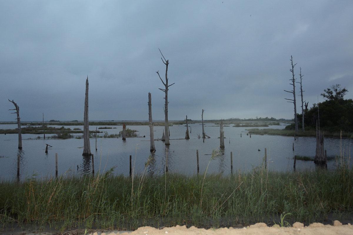 Saltwater Intrusion. June 2016. Chauvin, Louisiana. © Zoe Strauss