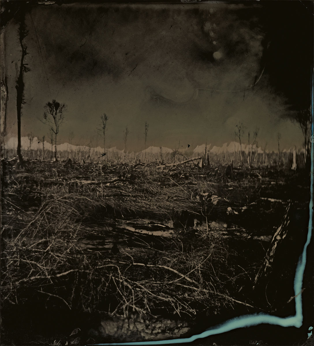 © Sally Mann.  Blackwater 3, 2008–2012.  Tintype. Collection of the artist