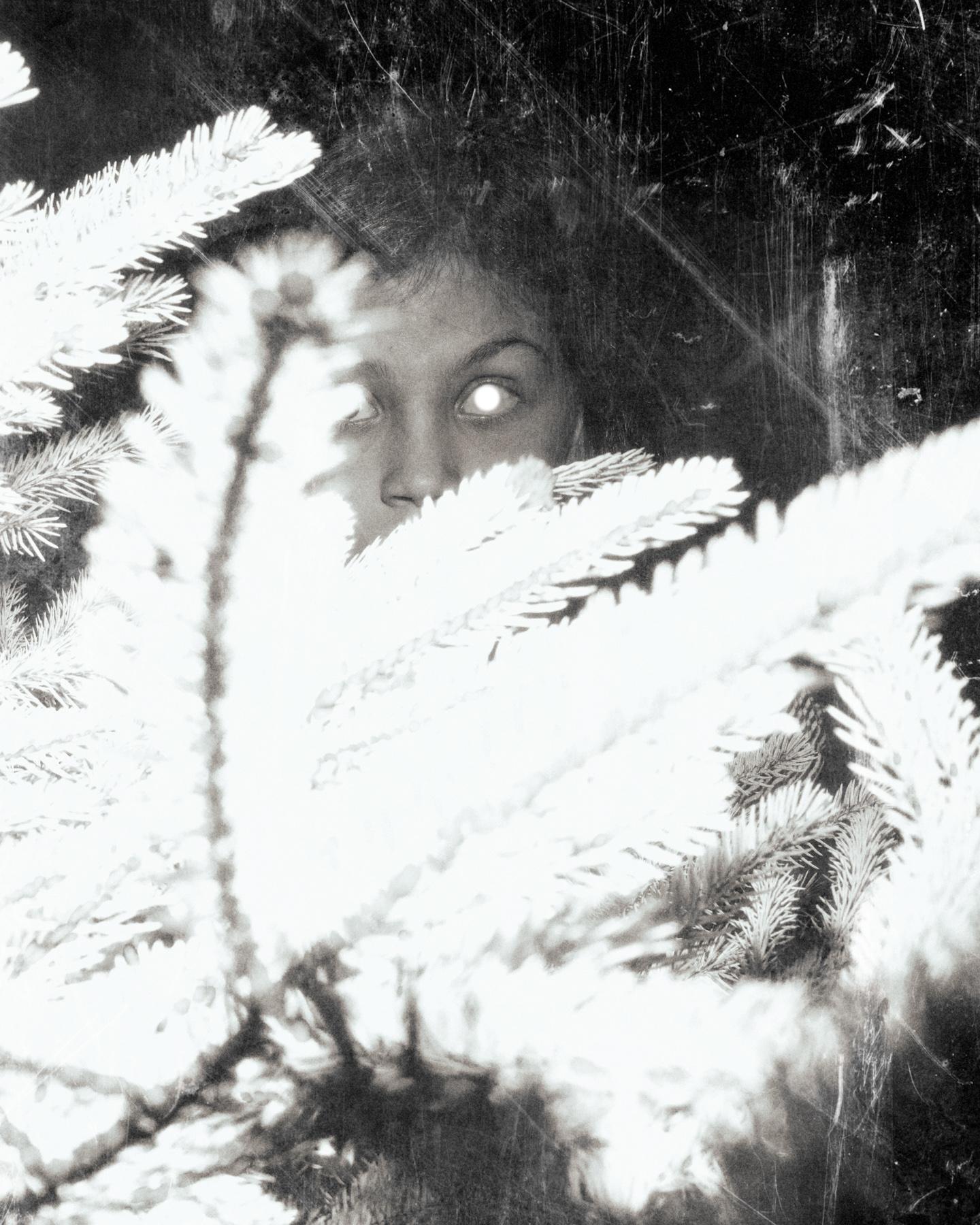 Silver Eyed © Paul Thulin