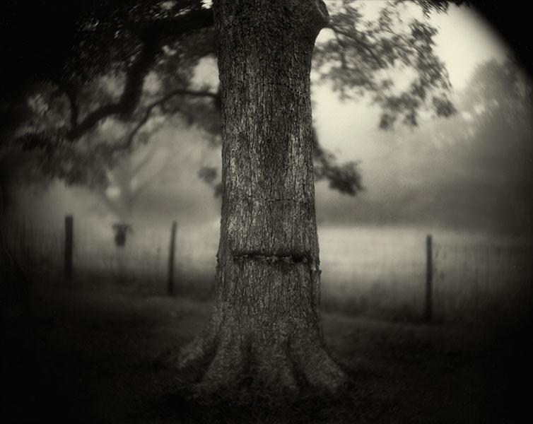 """Deep South"" Tea Toned Silver Gelatin Print ©Sally Mann"