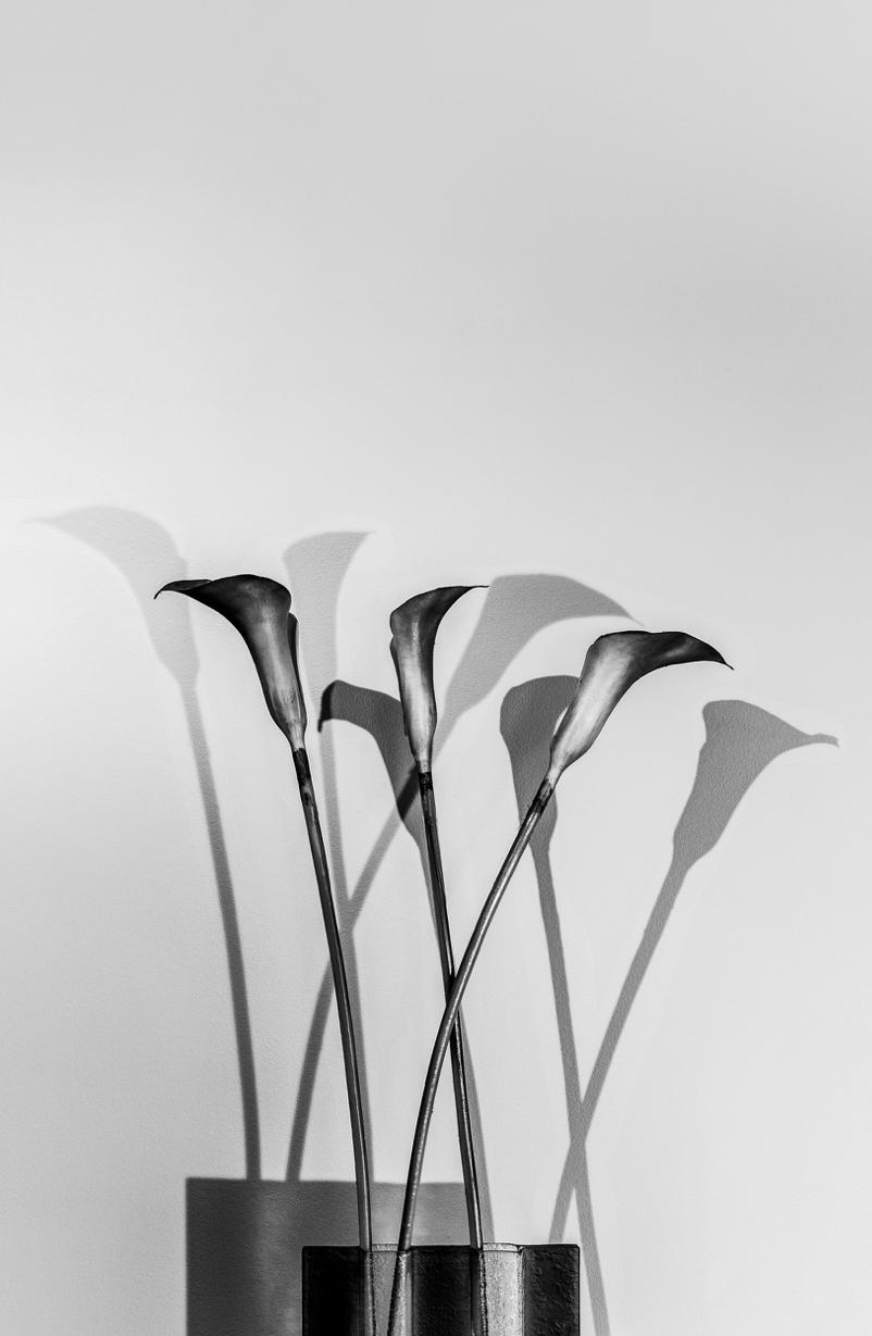 Lillies 2015 © JB Rasor