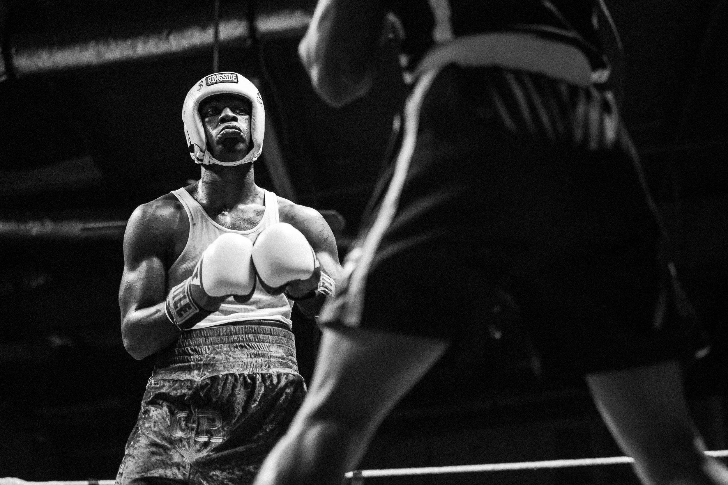 boxer cr-4.jpg