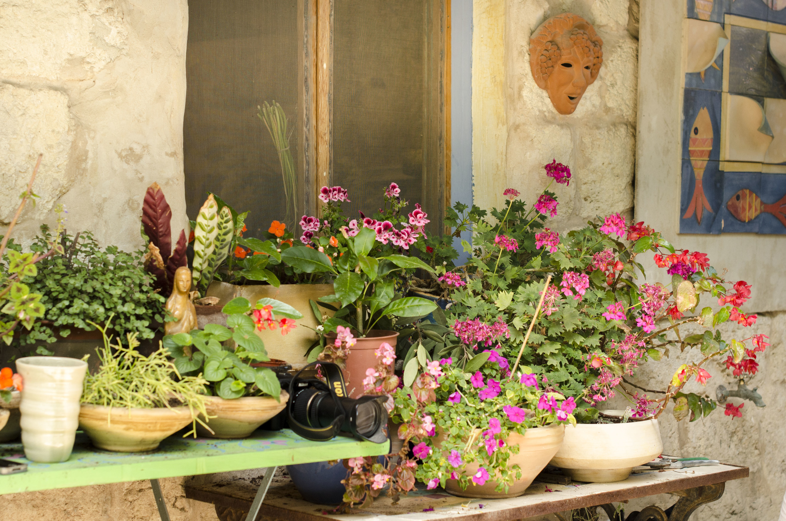 Entrance to the house - different kinds of Geranium, Red Begonia & Impatiens Walleriana.