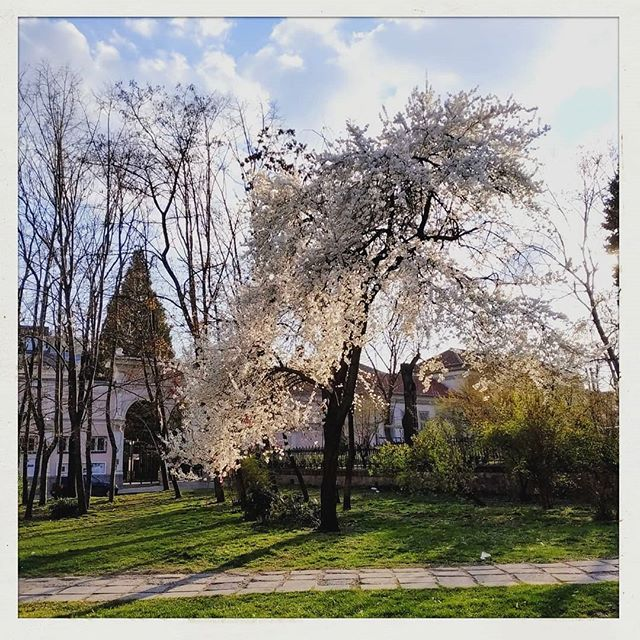 Almond tree blossom and beautiful light at Sofia streets💖  #Sofia #sofiastreets #almondtree #blossom #flowers #grass #oldcity #city #citycenter #sofiacity #sofiabulgaria #light #sunlight #travel #lametayel #למטייל #spring #springiscoming #nature #cityview #ig_sofia #instaflower #instamood #cityofsofia #travelphotography #vacation #goldentime #ellaleshmanphotography #wind