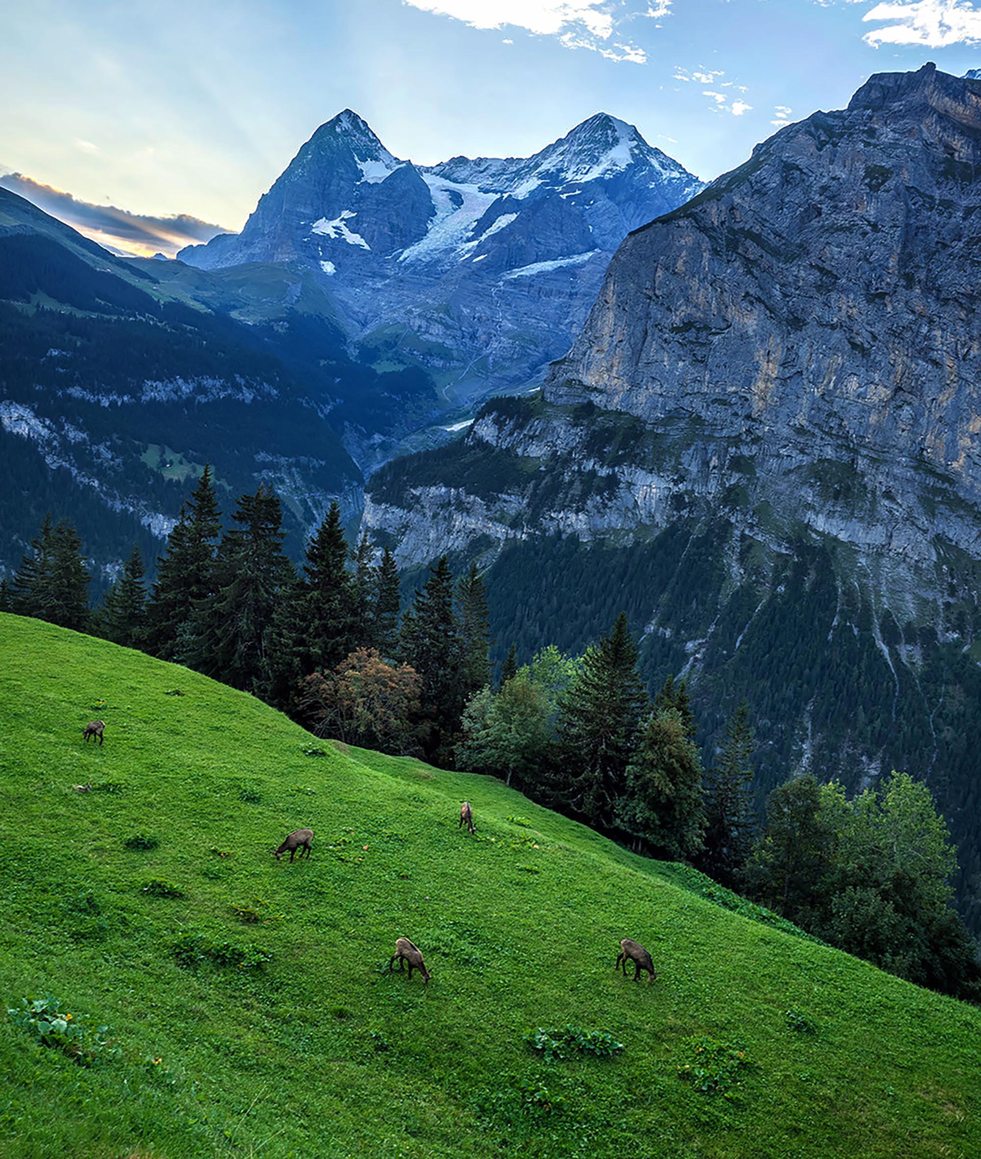Alps hill.jpg