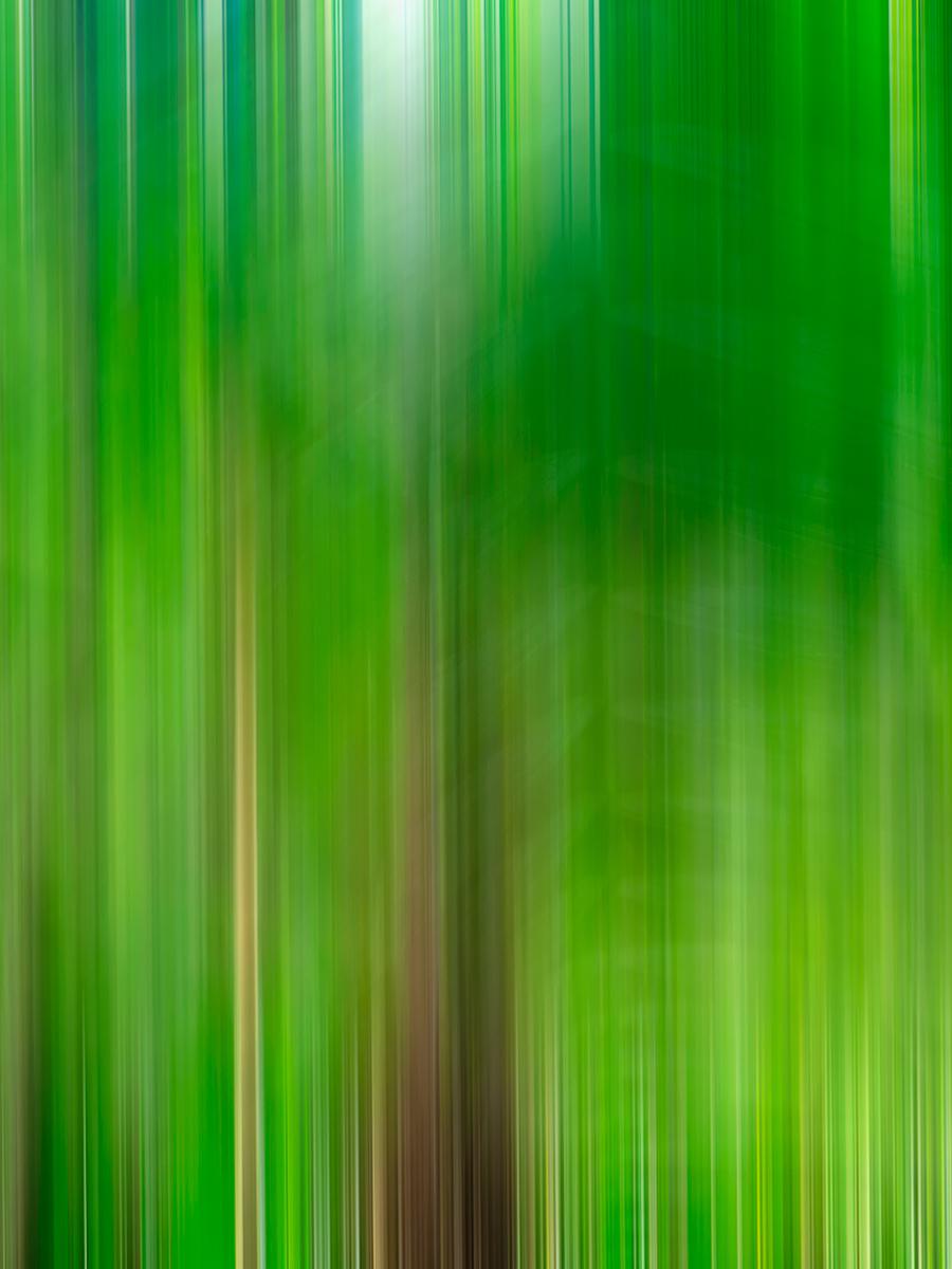 Forest Morning.jpg