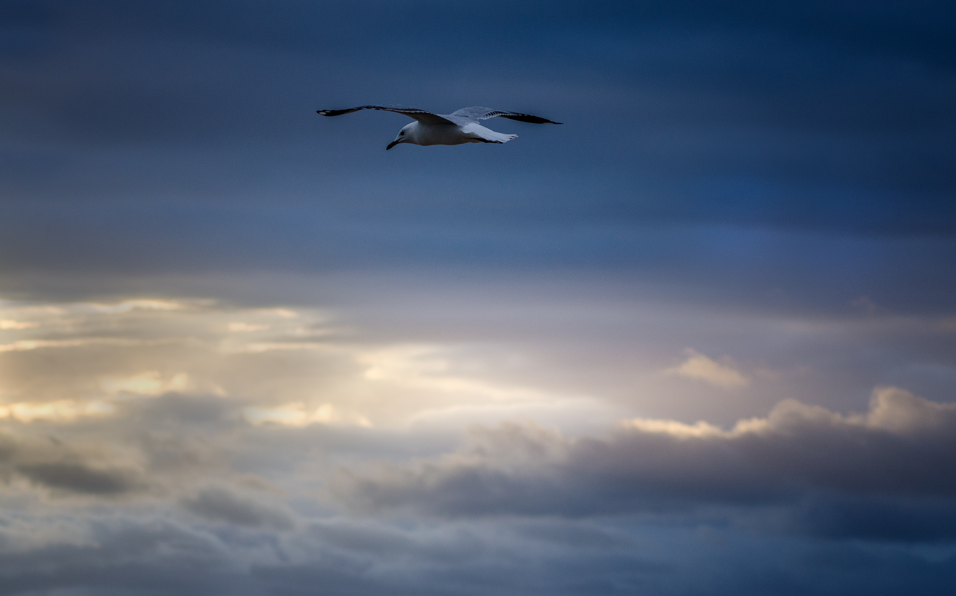 Flying Alone.jpg