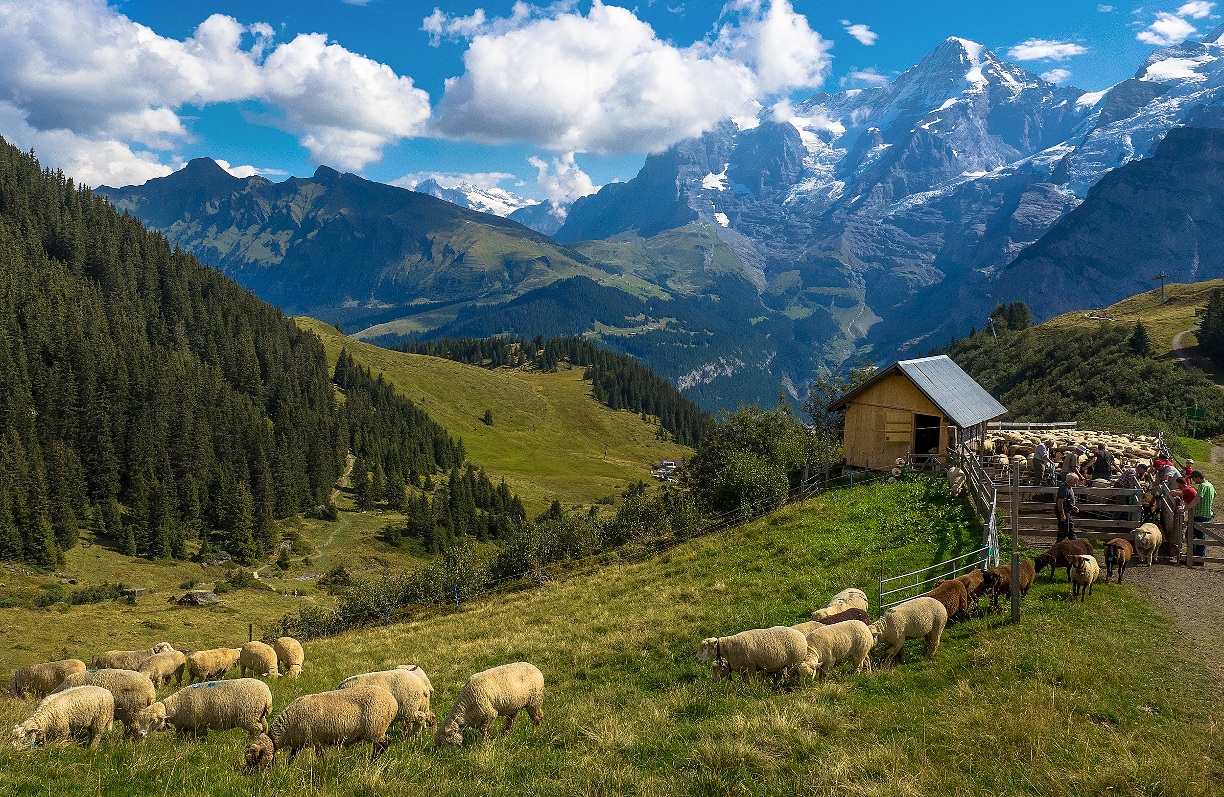 Swiss urban-P.jpg