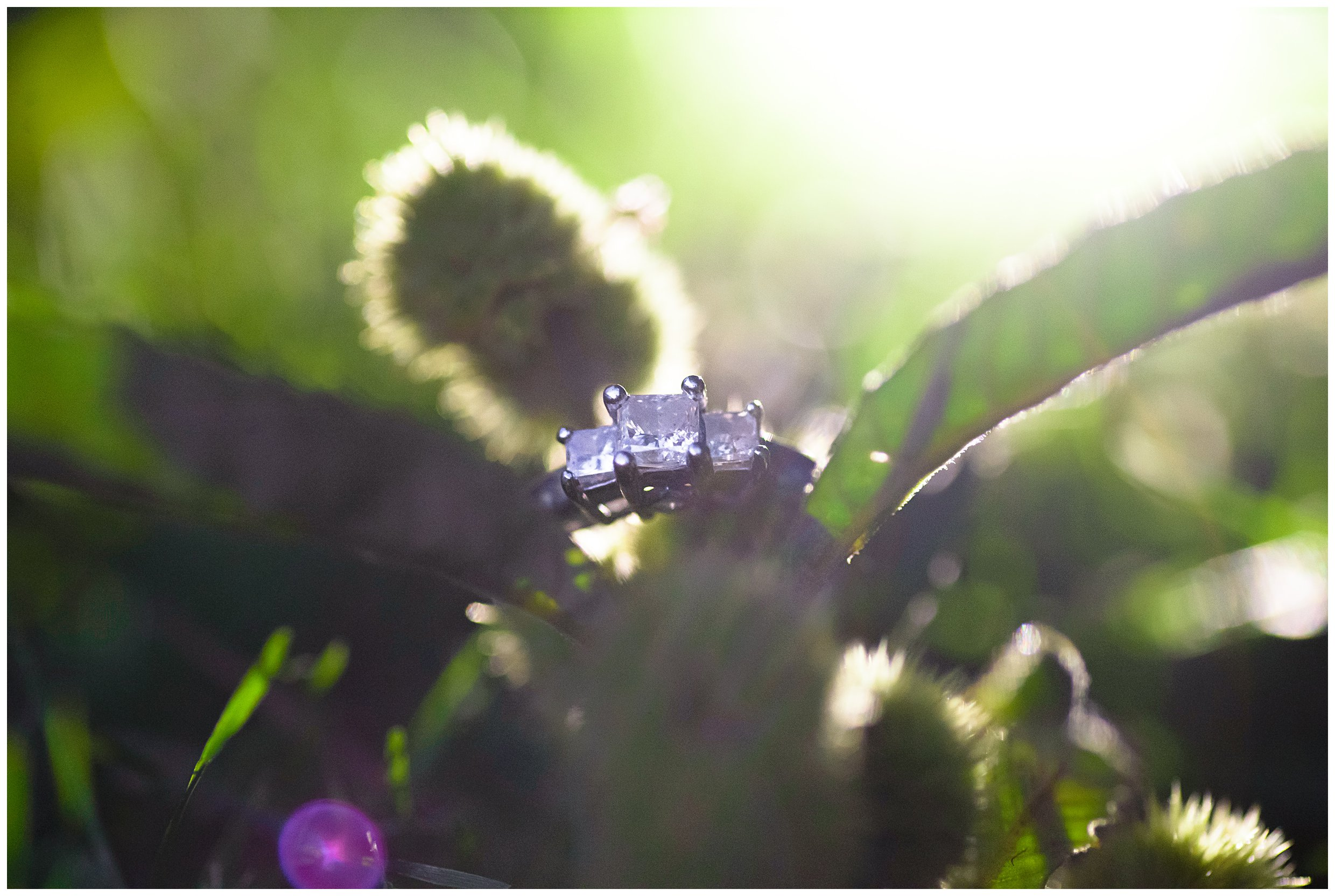 We were walking back to the car in the dark when I asked if I could try something a little different with their ring. I used my cell phone flash light and put it behind some pretty foliage I found along the path...loved the result!