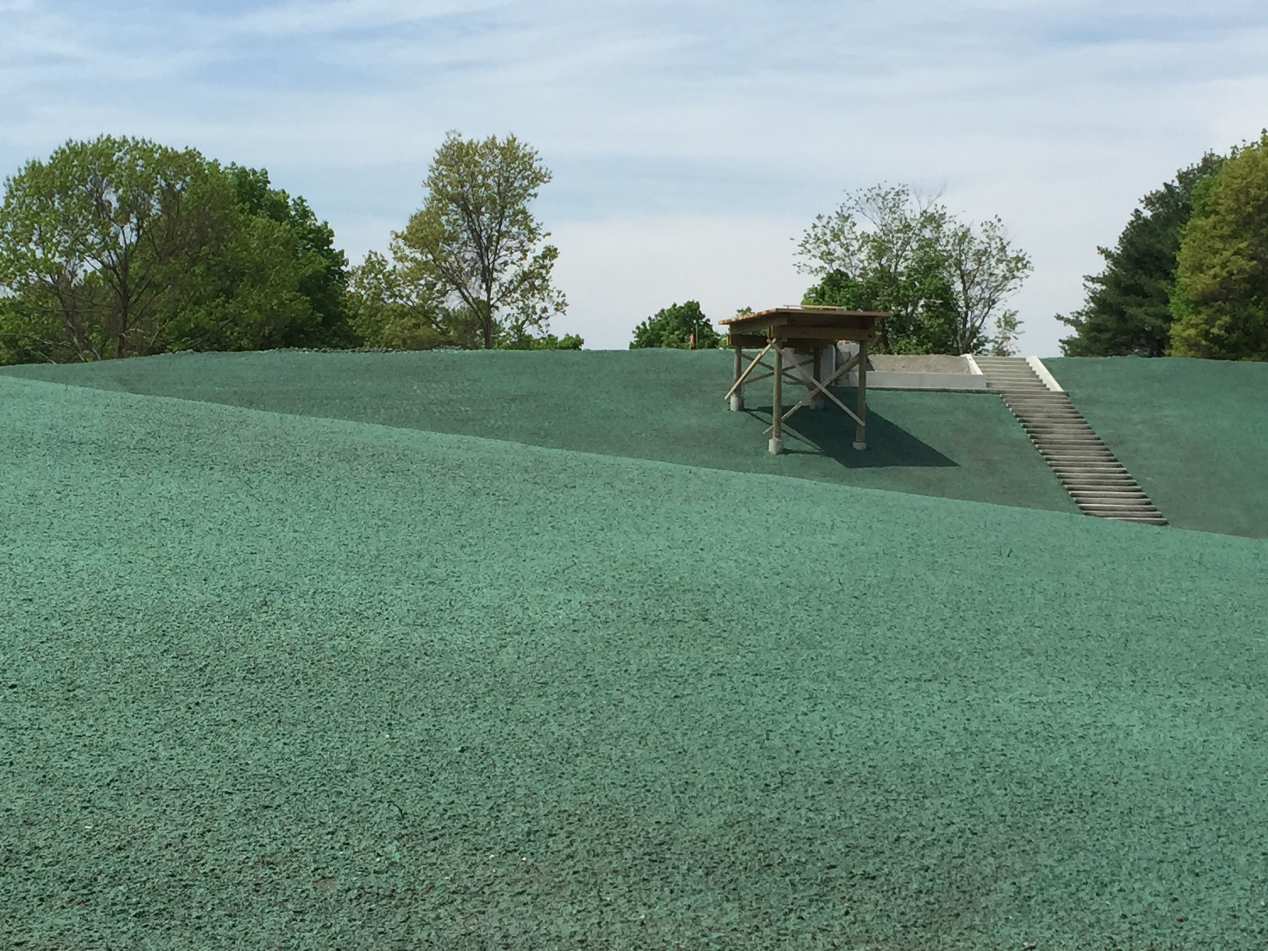 Viewing platform in a sea of green