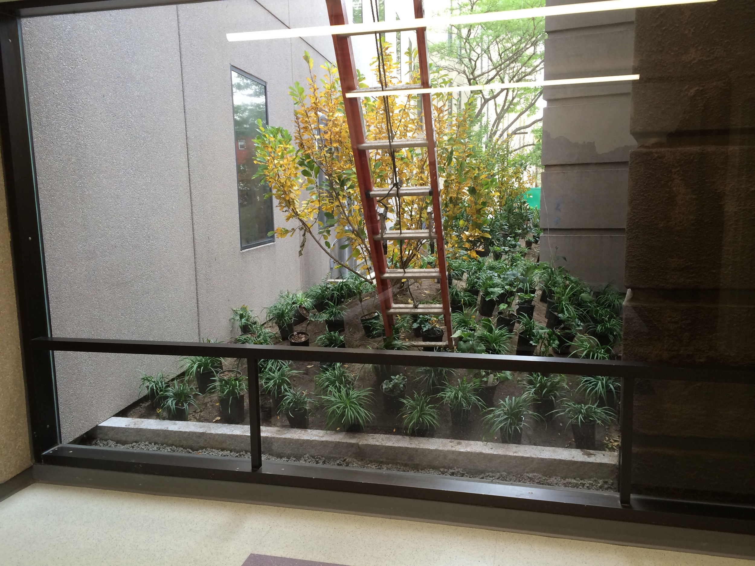 Interstitial garden with plants placed