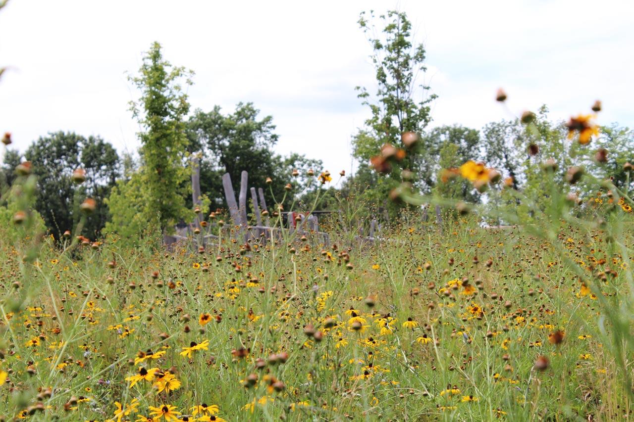 Fisher-Hill-Reservoir-Park-Close-Up-Shot-of-Meadow-KMDG.jpg