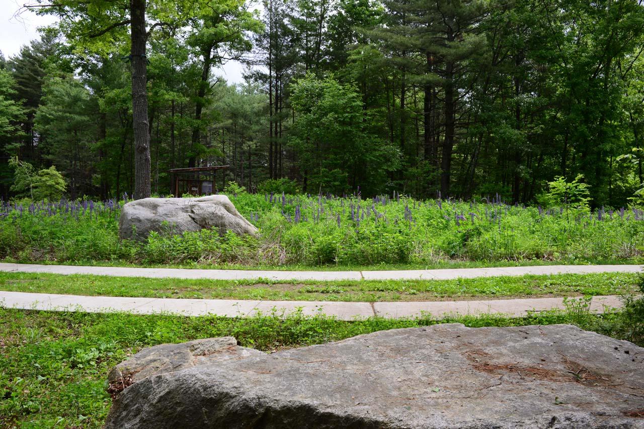 Summer-Star-Wildlife-Sanctuary_lupine-meadow_KMDG_DKM_7681.jpg