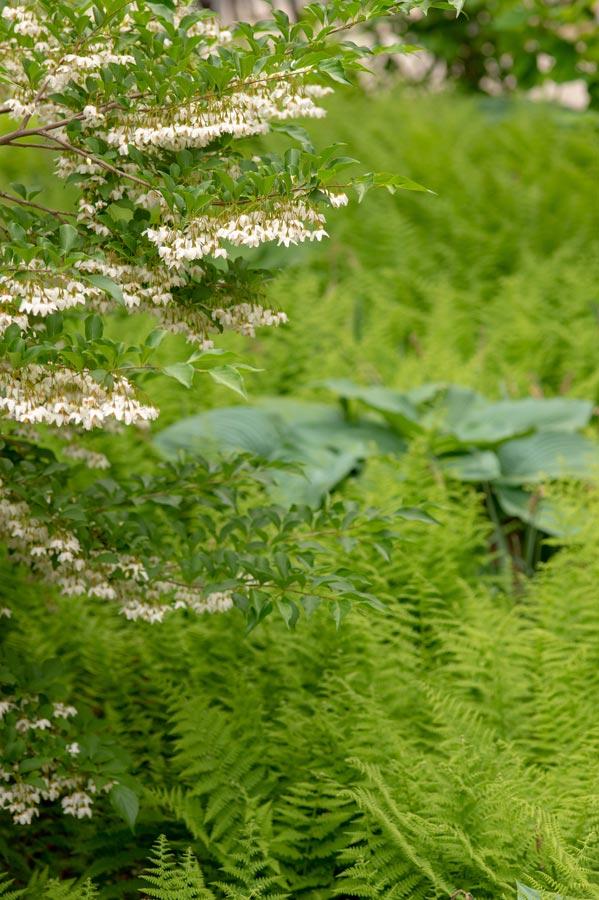 MIT-NW23_campus-landscape_courtyard_Klopfer-Martin_8.jpg