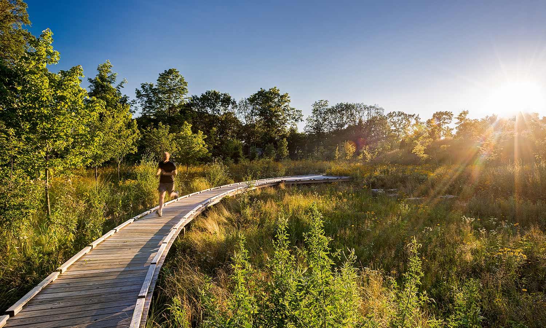 Fisher-Hill-Reservoir-Park_wet-meadow_deck-path_Klopfer-Martin.jpg