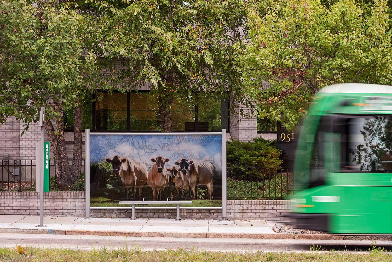Providence-R-Line_Rapid-Transit_bus-stop-cow-graphic_Klopfer-Martin.jpg