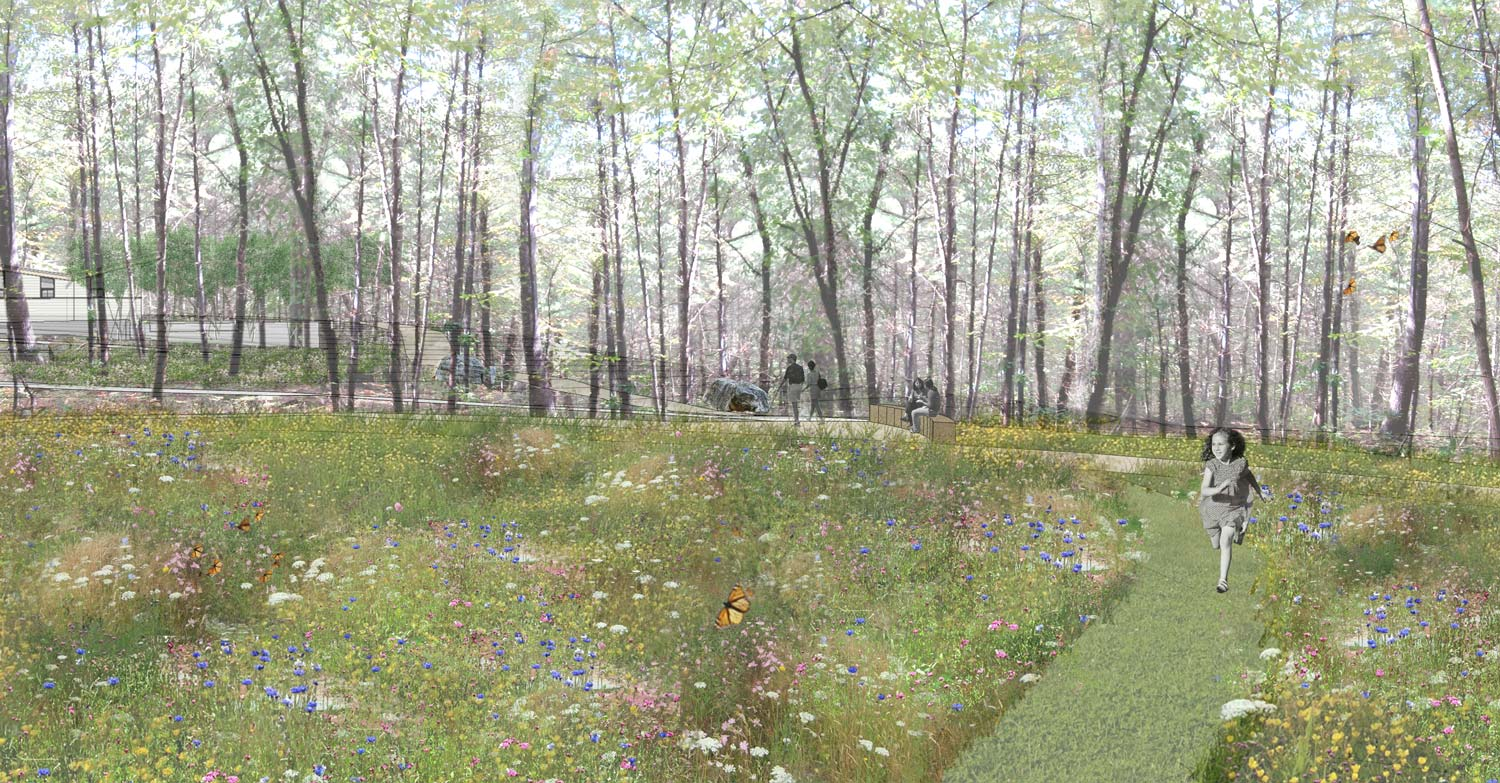 Summer-Star-Wildlife-Sanctuary_landscape-rendering-wildflower-meadow_Klopfer-Martin.jpg